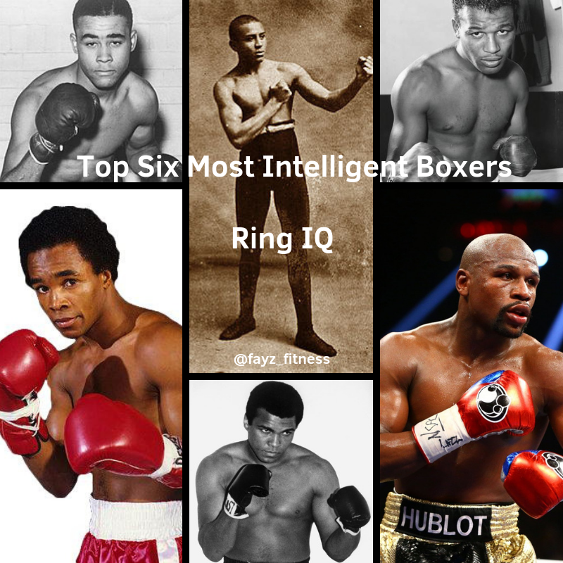 most intelligent boxers